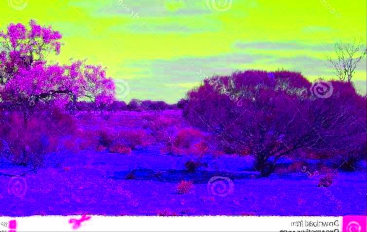 bush-australien.jpg
