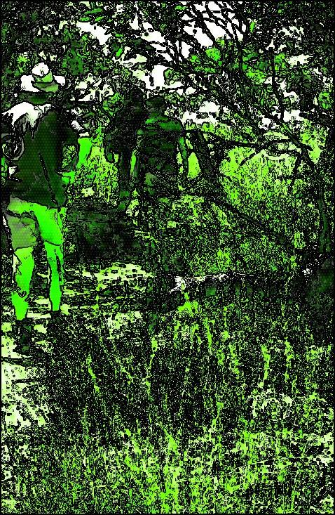 bush-walking.jpg